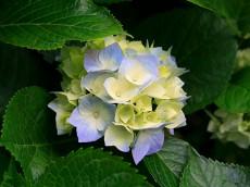 Ещё цветок